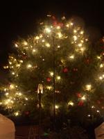 Titelbild des Albums: Weihnachstbäume